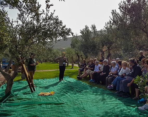 Liotrivi Olive Harvesting